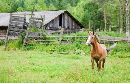 grazed: horse is grazed at the destroyed stable