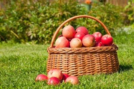basket with red apples costs on a grass photo
