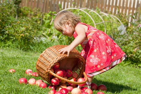 little girl pours out red apples from a basket Stock Photo - 10890869