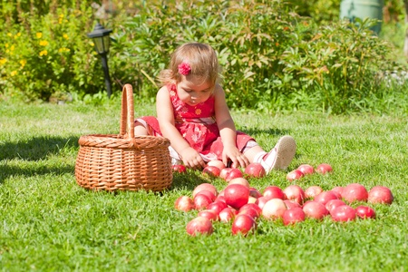 little girl collects the apples scattered on a grass in a basket Stock Photo - 10890876