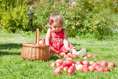 little girl collects the apples scattered on a grass in a basket Stock Photo - 10890879