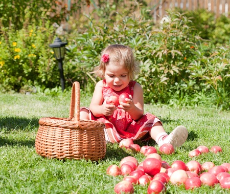 little girl collects the apples scattered on a grass in a basket Stock Photo - 10890877