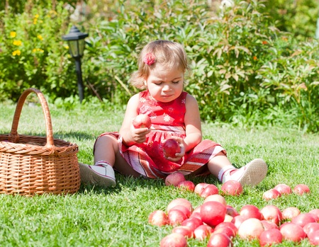 little girl collects the apples scattered on a grass in a basket Stock Photo - 10890905