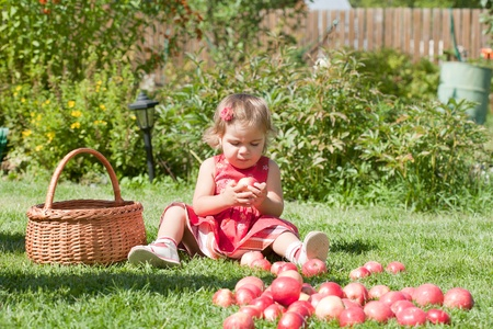 little girl collects the apples scattered on a grass in a basket Stock Photo - 10890867