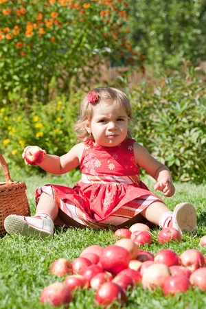 little girl collects the apples scattered on a grass in a basket photo