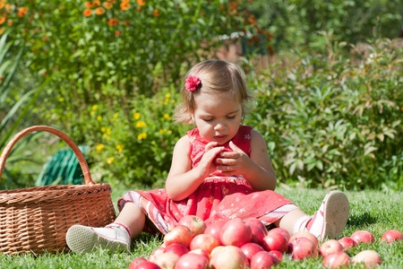 little girl collects the apples scattered on a grass in a basket Stock Photo - 10890921