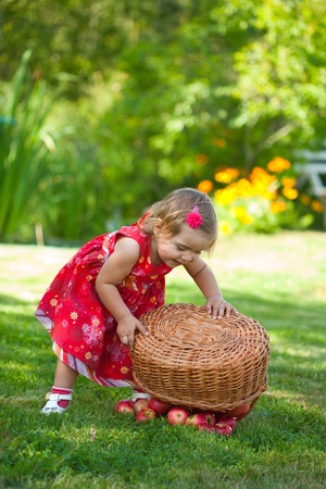 little girl pours out red apples from a basket Stock Photo - 10890862