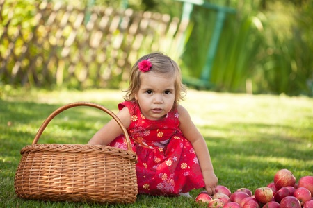 little girl collects the apples scattered on a grass in a basket Stock Photo - 10890842