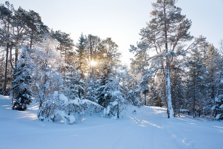 country landscape: Winter landscape with snow Stock Photo