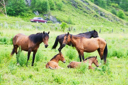 grazed: Horses are grazed on a meadow near to highway