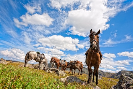 harnessed horse against mountains Stock Photo - 12332530