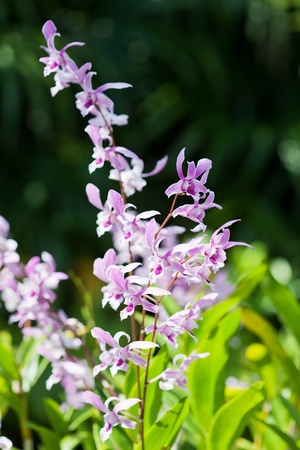 exotic orchids growing on island Bali Stock Photo - 13365940
