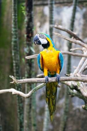 Colorful Parrot Sitting On A Branch photo