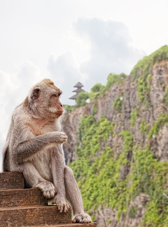 Wild monkey against the temple to Uluvat, Bali, Indonesia photo