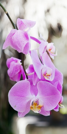 exotic orchids growing on island Bali Stock Photo - 13510696