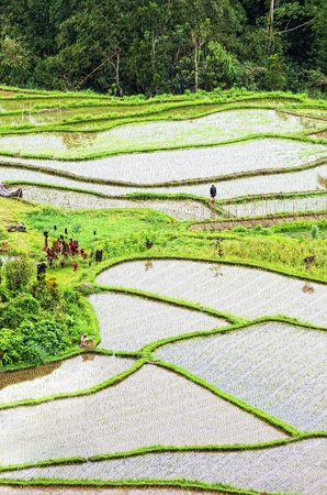 Terrace rice fields, Bali, Indonesia photo