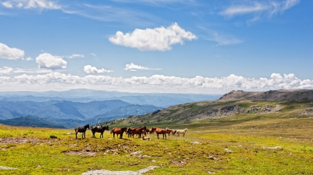 Mountain Altai. A beautiful landscape with horse and the blue sky.  photo