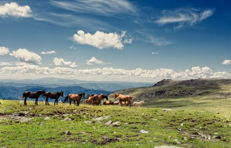 Mountain Altai. A beautiful landscape with horse and the blue sky.  Stock Photo - 13608612
