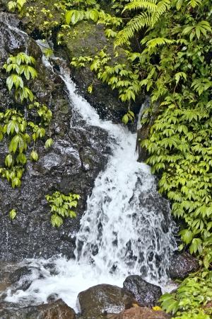 Falls in jungle on island Bali  photo