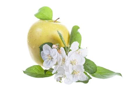 Big flavovirent apple and apple-tree flowers Stock Photo - 13969922