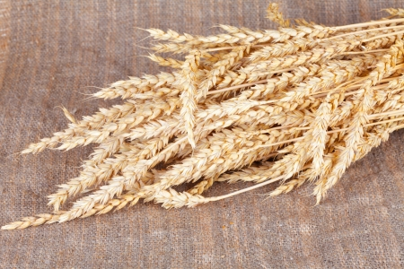 agronomics: Ears of a rye lie on a linen fabric
