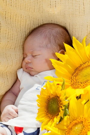 sleeps: newborn baby sleeps among big sunflowers Stock Photo