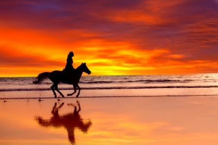 Silhouette de la fille à sauter sur un cheval sur une côte de l'océan sur un coucher de soleil Banque d'images