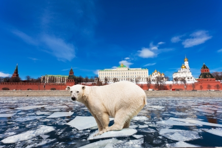 polar station: Spring in Moscow. The polar bear on an ice floe floats by the Kremlin