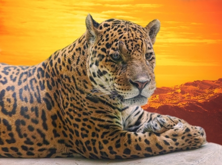 Leopard to lie on a log against a sunset photo