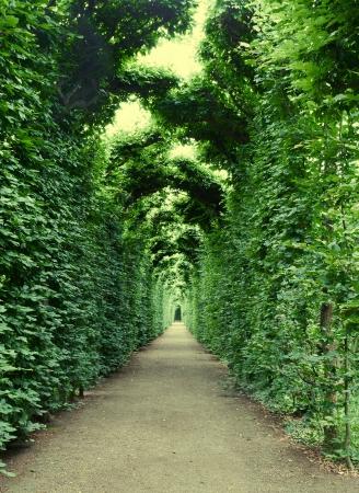 Arch, decorated with plants in Schonbrunn garden, Vienna Imagens