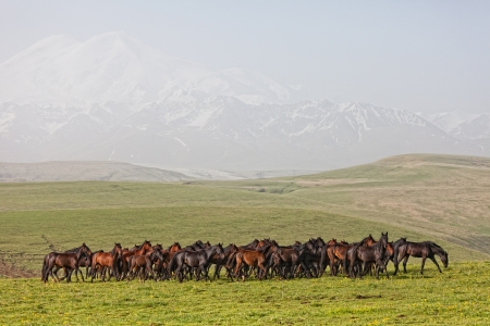 Herd of horses on a summer green pasture photo