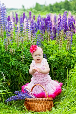 lupines: little girl with a basket among blossoming lupines
