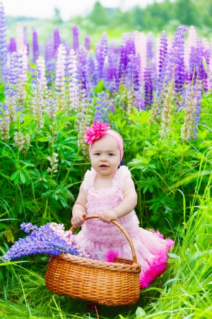 lupines: Little girl with a basket among blossoming lupines Stock Photo