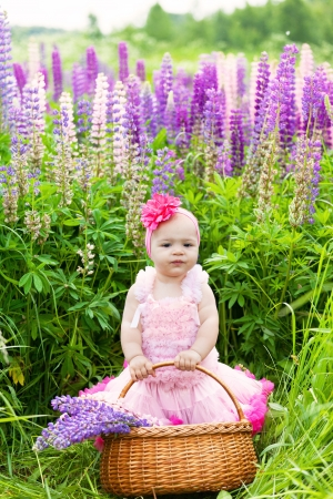 lupines: Little girl with a basket of blossoming lupines flowers