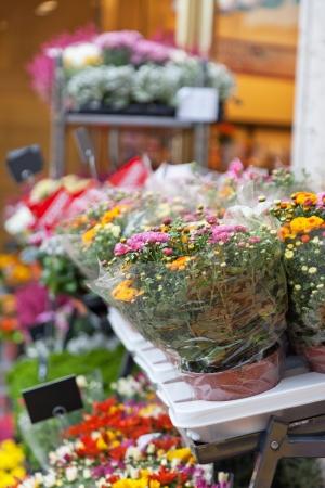 Street show-window of flower shop in Europe photo