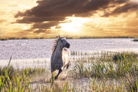gray horse runs on water against a sunset photo