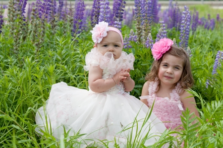 lupines: Two girls in elegant dresses near blossoming lupines