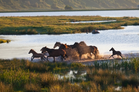Herd of horses on a summer pasture. Elbrus, Caucasus, Karachay-Cherkessia photo