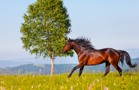 Arab racer runs on a green summer meadow photo
