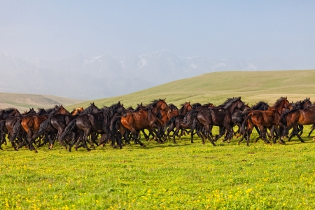 Herd of horses on a summer pasture photo