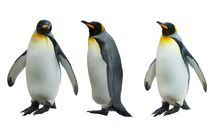 Three imperial penguins on a white background Stock Photo