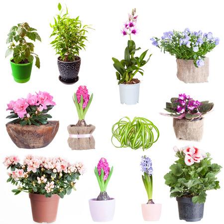 Set of houseplants on a white background photo