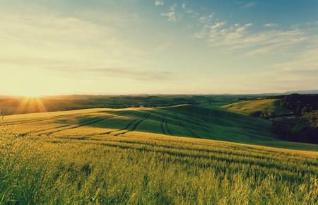 sol naciente: Campo de trigo en los rayos del sol naciente Toscana Italia