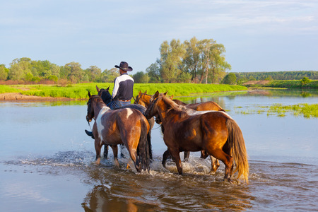 conducts: cowboy fords through the river with horses
