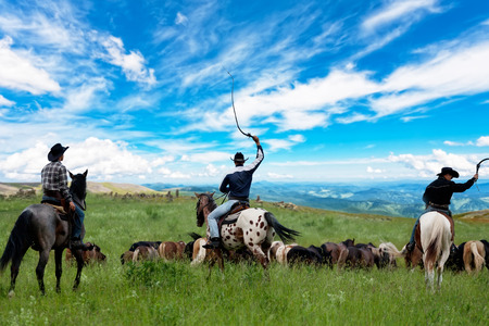 Three cowboys drive herd of horses Stockfoto