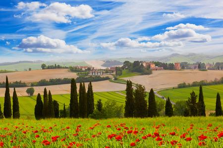 꽃이 만발한 양 귀 비, 토스카나, 이탈리아와 시골 풍경
