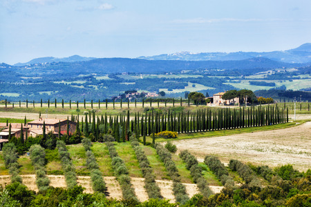 Typical Tuscan landscape with farmer houses and vineyards photo