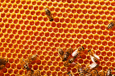 Working bees on honeycombs filled with honey