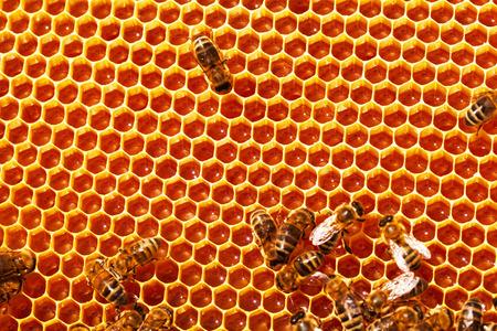 honeycomb: Abejas que trabajan en los panales llenos de miel