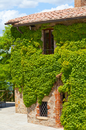 twined: Wall of the old farmer house twined grapes Stock Photo